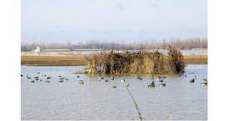 My Ultimate Duck Blind