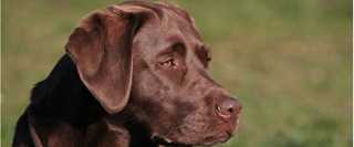 Top 5 Duck Dog Breeds To Consider When Buying a Puppy