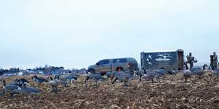 geese4JF19-depalma