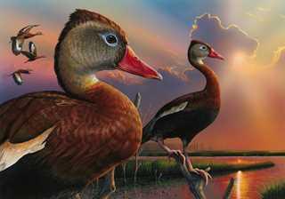 duckStampWinner2019