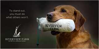 riverview-farm-kennel
