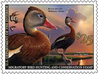 2020 Federal Us Christmas Stamps Buy Your 2020 2021 Federal Duck Stamp